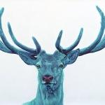 STAG-ON-WHITE-2012-Gicléedruck-auf-Aquarell-Limitierte-Auflage-76-x-127-cm