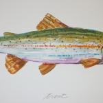 Trout-2001-Monotypie-39-x-50-cm