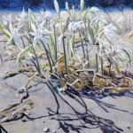 Strandlilien-3-50x50-2014